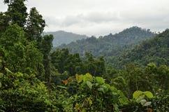 tropisk queensland rainforest Arkivbilder