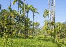 tropisk rainforest Arkivfoton
