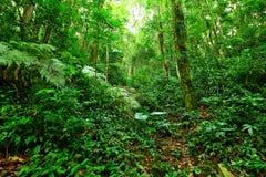 tropisk rainforest Arkivbild