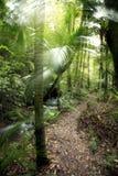 tropisk rainforest Arkivfoto