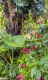 Tropisk rainforest royaltyfria bilder