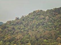 tropisk rainforest Arkivbilder
