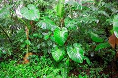 Tropisk Rainforest, Costa Rica Royaltyfria Bilder