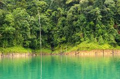 Tropisk rainforest på Kenyir laken royaltyfri fotografi