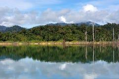 Tropisk rainforest på Kenyir sjön royaltyfri bild