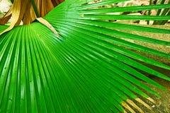Tropisk rainforest på Seychellerna Royaltyfri Foto
