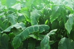 Tropisk rainforestgrönska, tropiskt klimat, naturbakgrund Arkivfoton