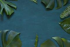Tropisk ram för sidasommarbegrepp på den trämörka bakgrunden arkivbilder