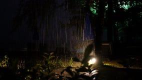Tropisk regnåskväder, blixtexponering arkivfilmer