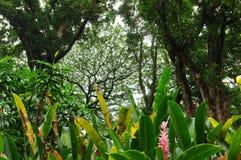 Tropisk Regna-Skog Royaltyfri Foto