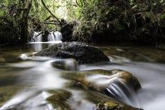 Tropisk regnskog från Colombia arkivbild