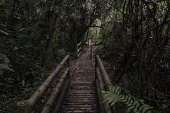Tropisk regnskog från Colombia royaltyfria foton