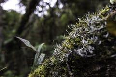 Tropisk regnskog från Colombia royaltyfria bilder