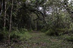 Tropisk regnskog från Colombia arkivfoton