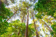 Tropisk regnskog i nord av Thailand Arkivfoton