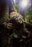 Tropisk regnskog, Queensland, Australien Arkivfoto