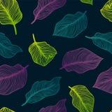 Tropisk sömlös modell med exotiska palmblad Monstera gömma i handflatan, banansidor Botanisk design för exotisk textil Royaltyfri Fotografi
