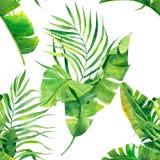 Tropisk s?ml?s modell med exotiska palmblad Tropisk djungell?vverkillustration exotiska v?xter Sommarstranddesign Parad royaltyfri foto