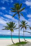 Tropisk sandig strand med palmträd som är karibiska Arkivfoton