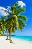 Tropisk sandig strand med palmträdet Arkivbilder