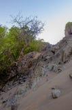 Tropisk sandlutning Royaltyfri Fotografi