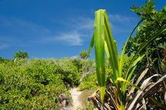 Tropisk sandstrand och havsvatten Arkivbilder