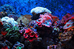 Tropisk seaweed och koraller royaltyfri fotografi