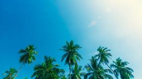tropisk semester för sommar Arkivbild