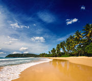 Idyllisk strand. Sri Lanka Arkivfoton