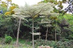 Tropisk semesterort på Hai Zhu Island Arkivbild