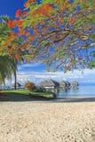 Tropisk semesterort Tahiti Royaltyfria Foton