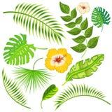 Tropisk sida- och blommavektor Arkivbilder