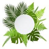 Tropisk sidabakgrund med vitrundabanret Gömma i handflatan ormbunkar, monsteras Royaltyfri Bild