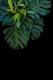 Tropisk sidagarnering på svart bakgrund, ormbunke, monstera, Royaltyfri Foto