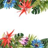Tropisk sidaillustration Fotografering för Bildbyråer