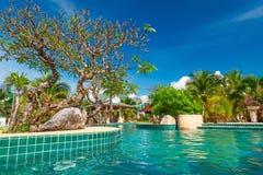 Tropisk simbassäng i Thailand Arkivfoto
