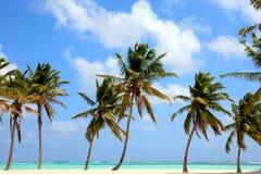Tropisk skönhet Royaltyfria Bilder