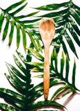 Tropisk sked royaltyfri foto