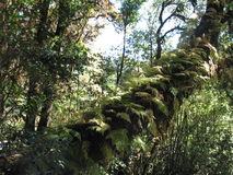 tropisk skog Arkivfoto