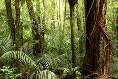 Tropisk skog Arkivbilder