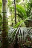 tropisk skog Royaltyfria Foton