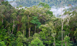 Tropisk skog efter regn royaltyfri foto