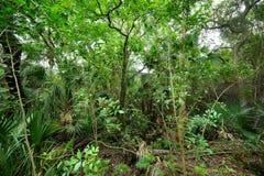 Tropisk skog i Florida Royaltyfria Bilder
