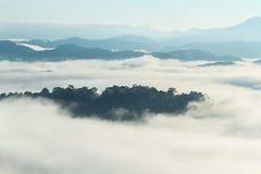 Tropisk skog i landskapet för morgonbergdal över mist, på synvinkeln Khao Kai Nui, Phang Nga, Thailand Arkivbild