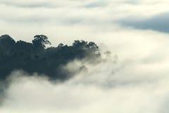 Tropisk skog i landskapet för morgonbergdal över mist, på synvinkeln Khao Kai Nui, Phang Nga, Thailand Fotografering för Bildbyråer