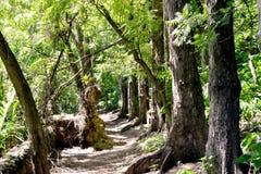 Tropisk skog på Indiska oceanen Royaltyfri Bild