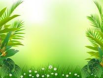 Tropisk skogbakgrund för skönhet Royaltyfri Illustrationer