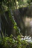 Tropisk skogsikt Arkivbild