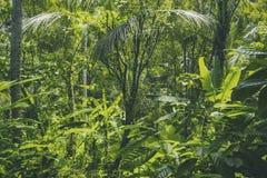 Tropisk skogsikt i asiatiskt land, grön naturtextur, djungelsiktsbakgrund Arkivbild