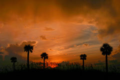 tropisk sky Arkivfoton